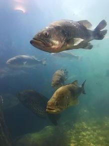 Baitfish_02