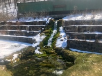 One of two springs that provide water to the hatchery